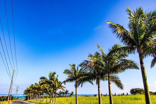 palm trees  sky  wood