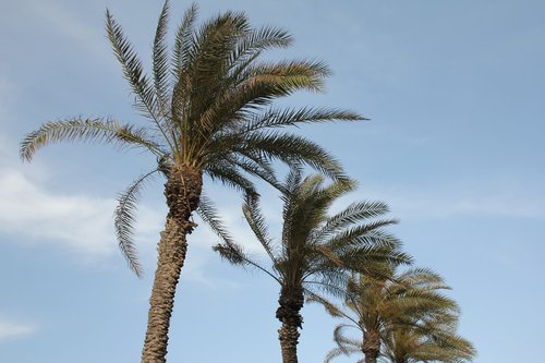 palm trees  sky  holiday