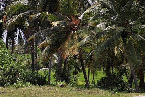 palm trees  tree  exotic