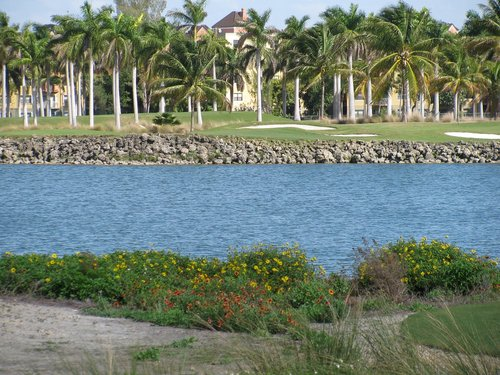 palm trees  water  golf