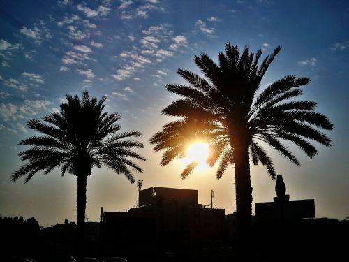 palm trees palm fronds palm leaf