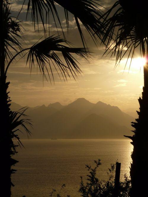 palm trees sea antalya