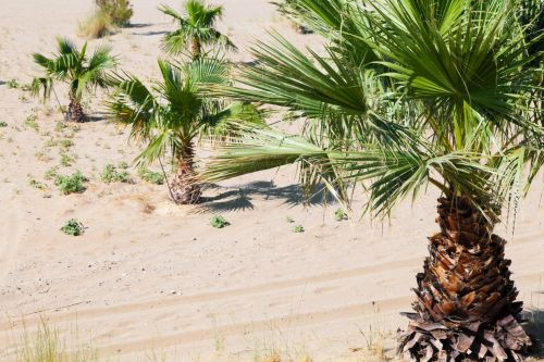 Palm Trees In Sand