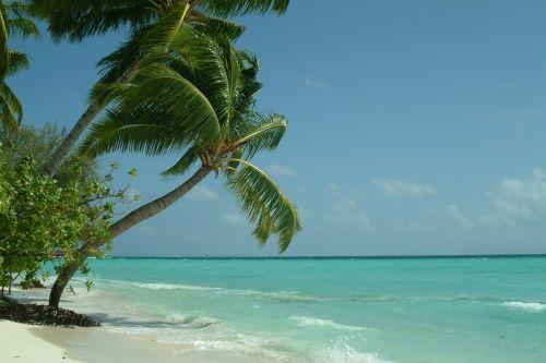 palma maldives beach