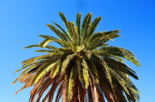 palma summer abkhazia