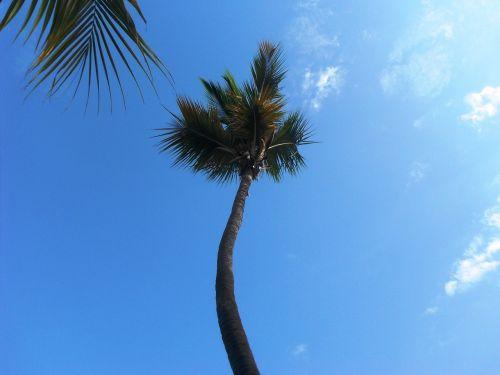 palma,karibai,tropikai