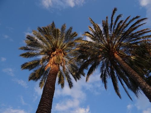 palms sky nature