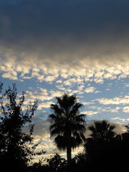 palms sunset clouds