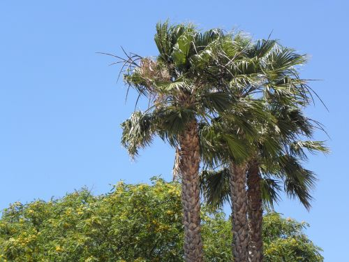 palms portugal algarve