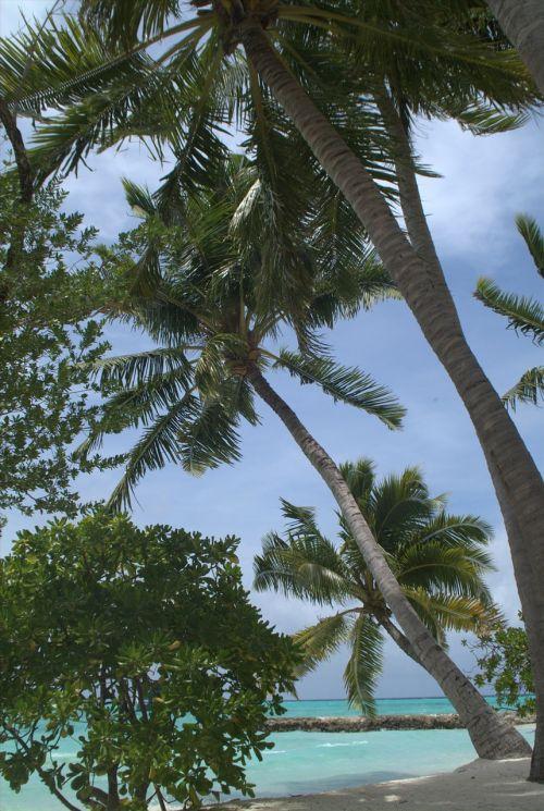 palms maldives beach