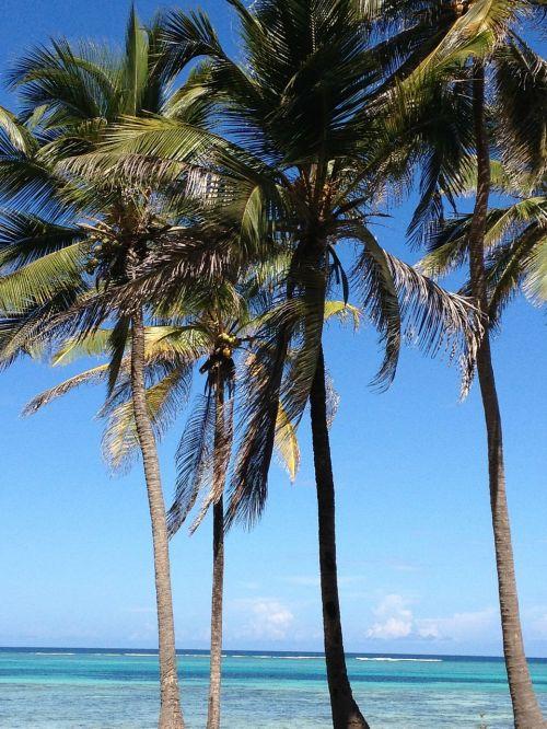 palms sea beach