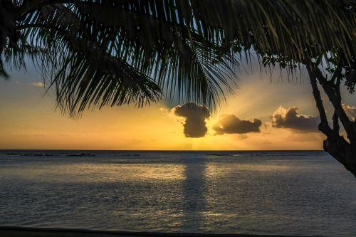 palms sunset sky