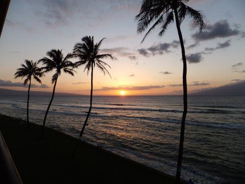 palms sunset ocean