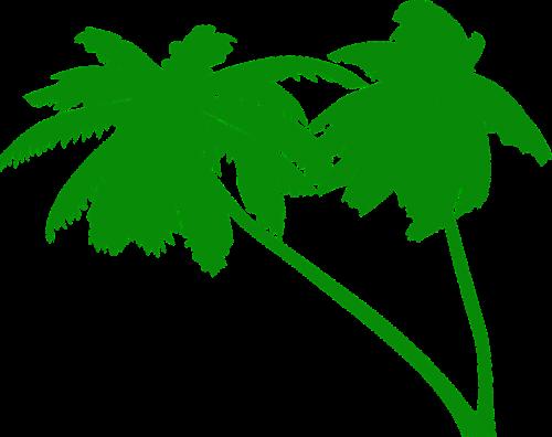 palms coconut tree coconut palms
