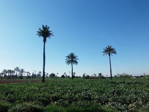 palms field elche