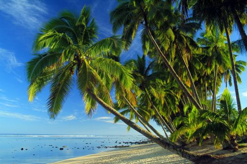 palms tropical beach tropical