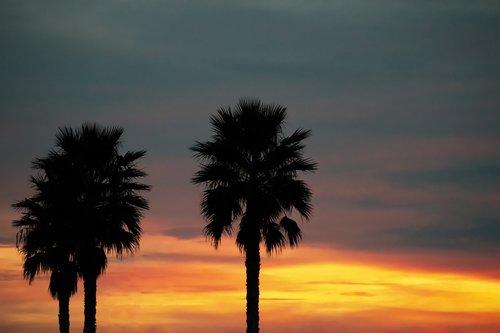 palms  dawn  sky