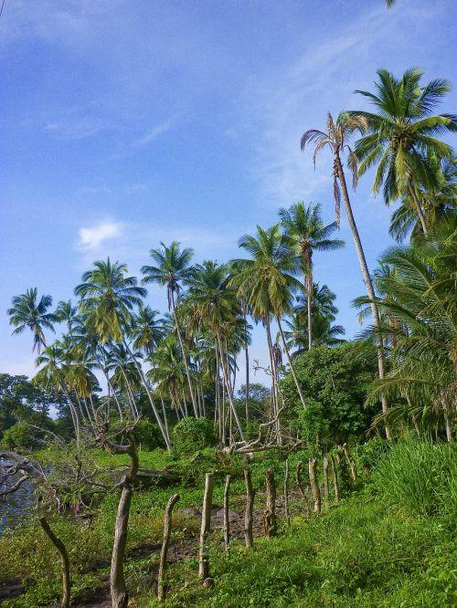 palms nicaragua ometepe