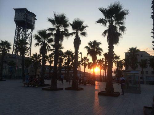 palms sunset barcelona