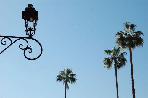 palms lamppost plants