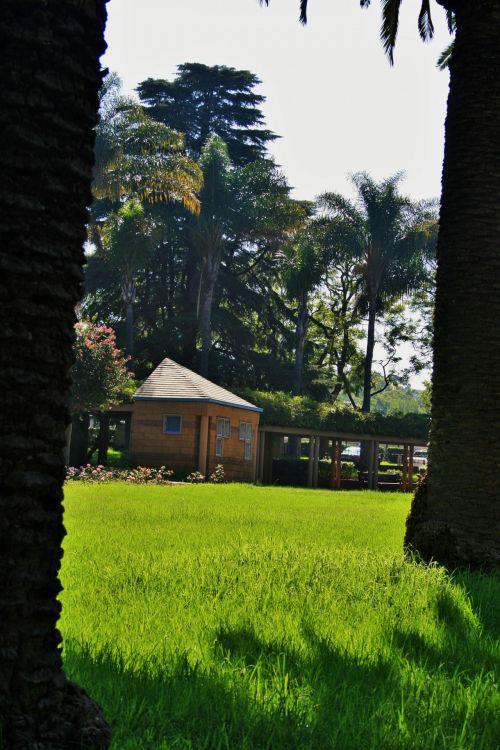 Palms And Lawn, Park In Pretoria