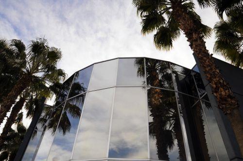 Palms Reflecting In Windows