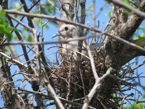 paloma nest ave