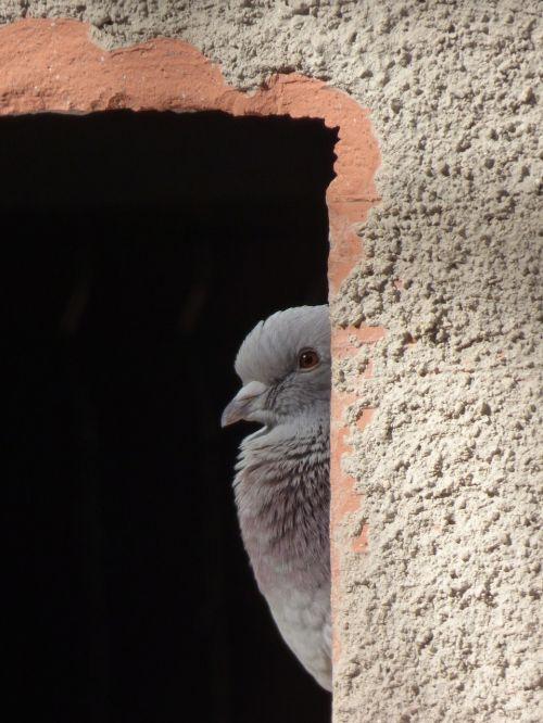 paloma window lookout