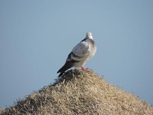 paloma ave nature