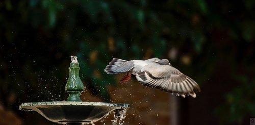 paloma  fleeting  flight
