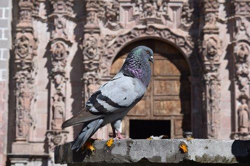 paloma  monument  pigeons