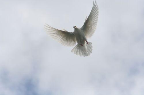 flying sky paloma