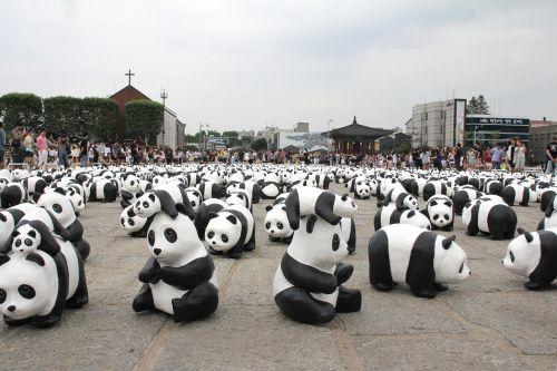 panda,paroda,Rodyti,eksponatas,gyvūnas,nykstantis,rodyti,žavinga,pritraukimas,Korėja