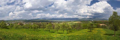 panorama spring landscape