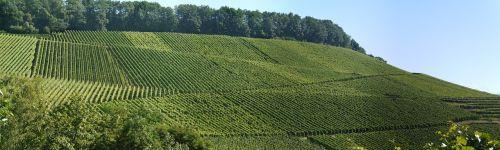 panorama vineyards south-facing slope