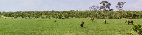 panorama elephant buffalo