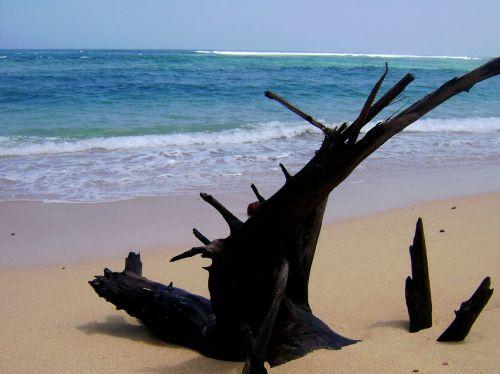 pantai nliyep malang