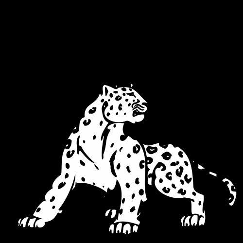 Panther On Black