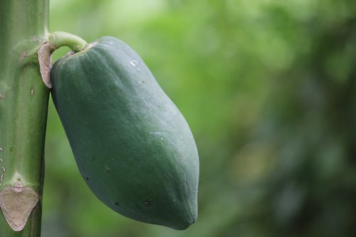 papaya  thailand fruit  fruit