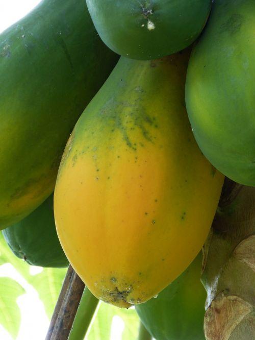 papajos,atogrąžų,Pietų Amerika,tropikai,vaisiai,sveikas,vitaminai,egzotiškas,Centrinė Amerika,Kosta Rika