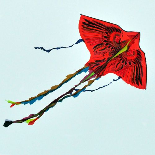 paper dragon fly of kite flying