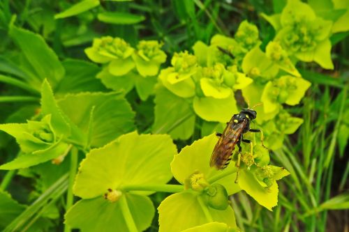 paper wasp wasp insect