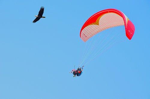 parachute  sky  fly