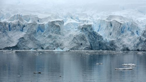 paradice bay antarctica glacier