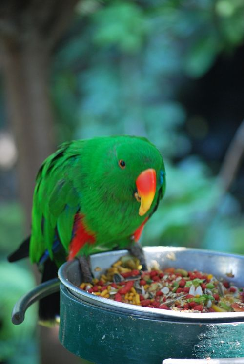 parakeet zoo feeding