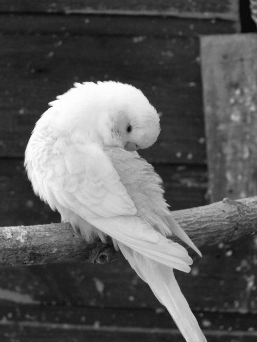 parakeets birds parakeet corrugated