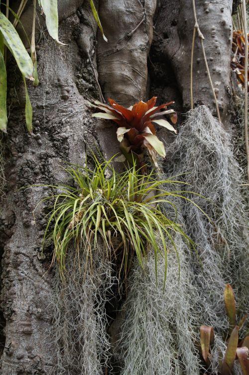 parasite parasitic plants host