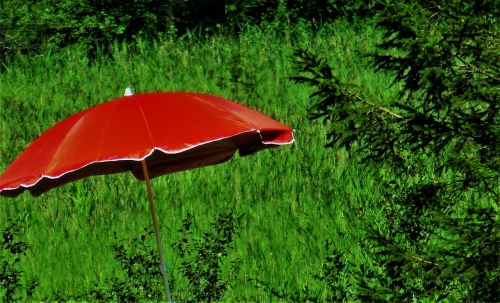 parasol red nature