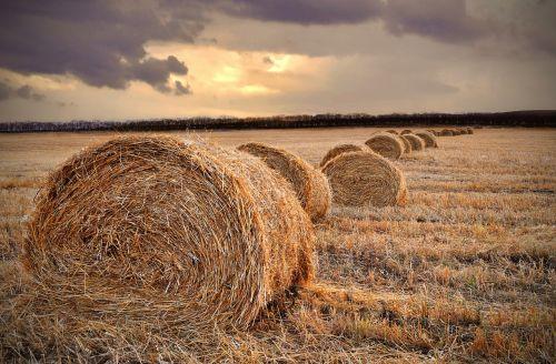 parcel field landscape