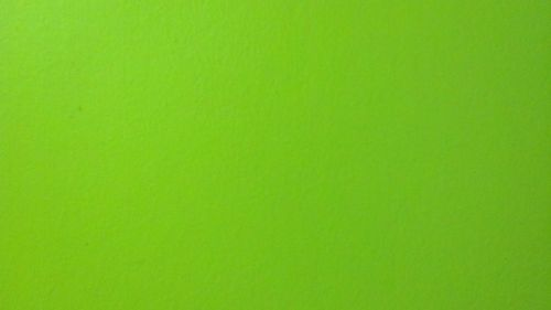 Absinthe Green Wall